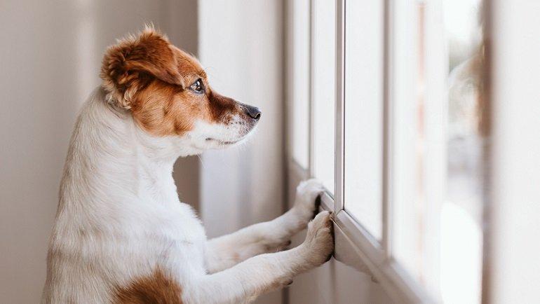 Araştırma ortaya koydu: Köpekler de insanlar gibi orta yaş krizi yaşıyor!