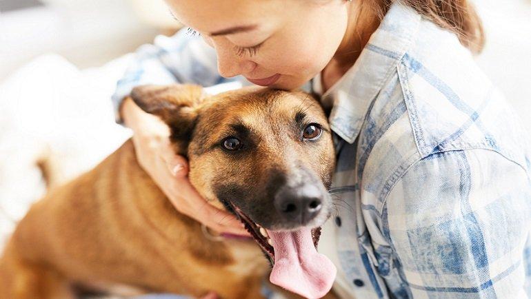 Yapılan araştırma ortaya koydu! Köpekler sahibine neden bağlı hissediyor?